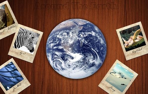 Фото обои животные, путешествия, фон, фотографии, земной шар