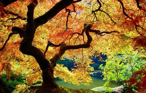Картинка Дерево, Осень, Листья