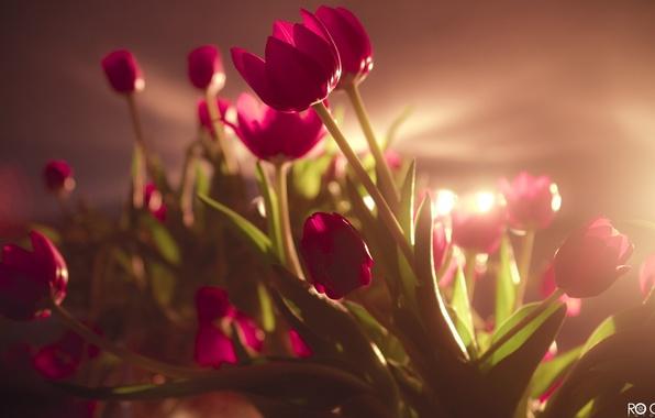 Картинка поле, попка, радость, счастье, цветы, улыбка, девушки, праздник, букет, розовое, красиво, тюльпаны, ярко, 8 марта, …