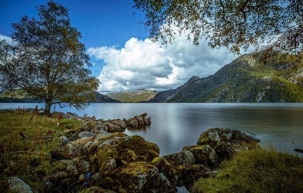 Картинка горы, озеро, камни, дерево, Норвегия, Norway, Ругаланн, Rogaland, Бьеркрейм, Austrumdalsvatnet, Bjerkreim