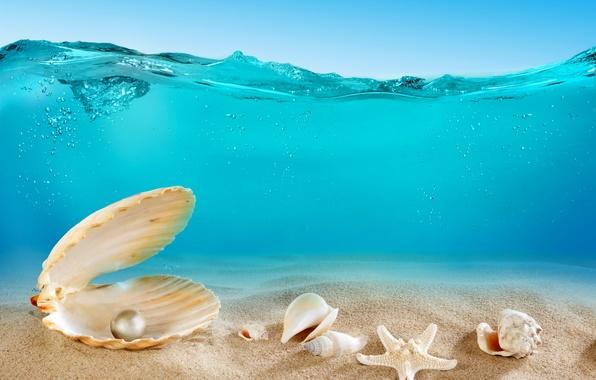 Картинка песок, море, океан, дно, ракушки, underwater, ocean, sand, seashells