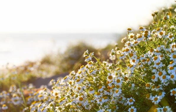 обои на рабочий стол цветы герберы лилии хризантемы
