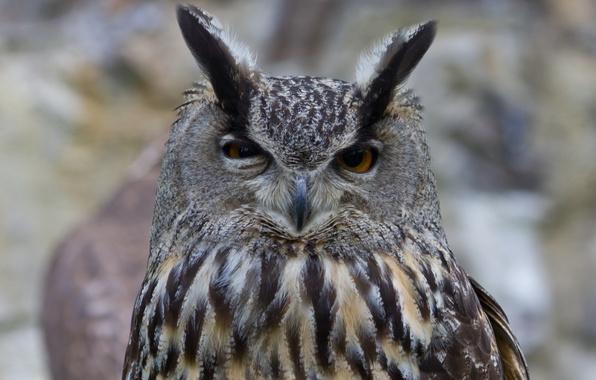 Филин сова птица голова оперение