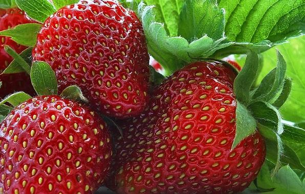 Картинка макро, ягоды, клубника, фрукты
