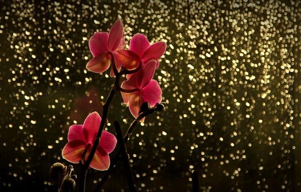 Картинка цветок, блики, ветка, красная, орхидея