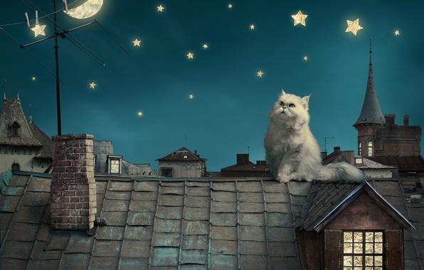 Картинка небо, звезды, ночь, котенок, луна, дома, сказка, крыши, фэнтези, moon, house, fantasy, sky, kitten, night, …