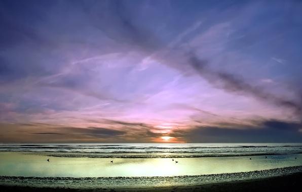 Картинка море, волны, небо, закат, птицы, берег
