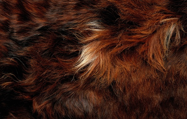 Фото обои hair, fur, animal