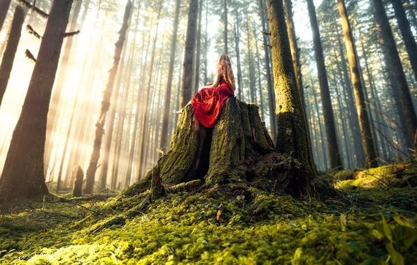 Картинка лес, девушка, платье, Lizzy Gadd, Woodland Magic