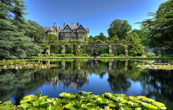Картинка листья, пруд, парк, лилии, Англия, England, Уэльс, Wales, Tyn-y-Groes