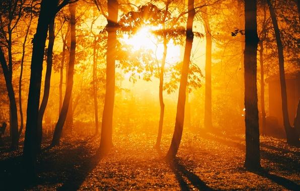 Картинка листья, солнце, деревья, природа, фон, дерево, widescreen, обои, листва, день, wallpaper, широкоформатные, background, полноэкранные, HD …