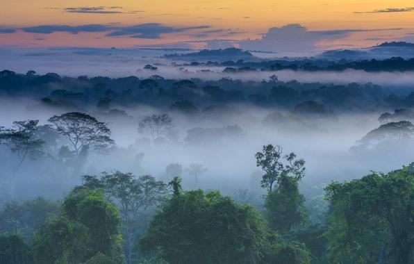 Картинка лес, туман, рассвет, Бразилия, Амазония