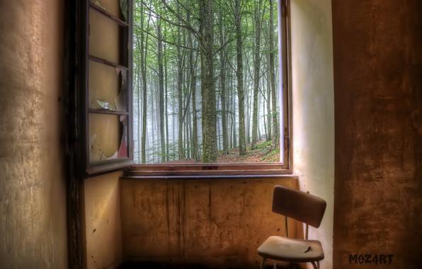 Картинка лес, комната, окно