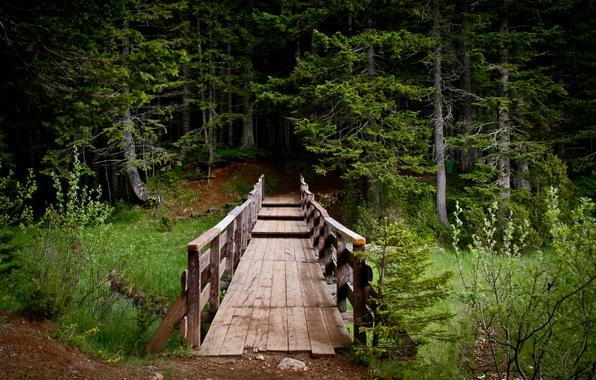Картинка лес, пейзаж, мост, природа, парк, тропа, красиво, Черногория, Montenegro, Дурмитор