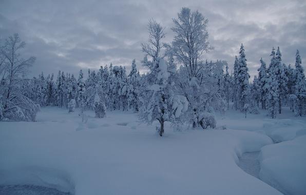Картинка зима, лес, снег, деревья, ручей, сугробы, Финляндия, Finland, Lapland, Лапландия, Саариселькя, Saariselka