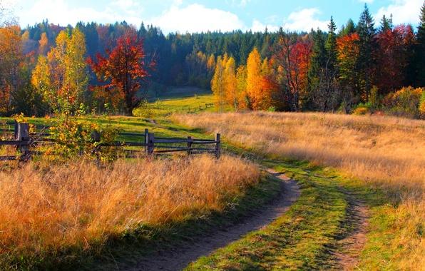 Картинка дорога, осень, лес, небо, трава, листья, деревья, горы, природа, colors, colorful, grass, forest, road, sky, …