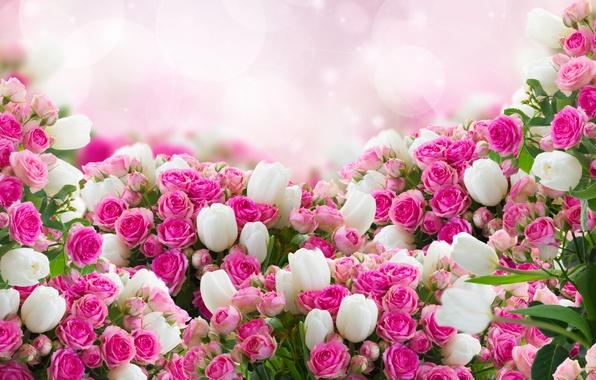 Картинка фото, Цветы, Розы, Много