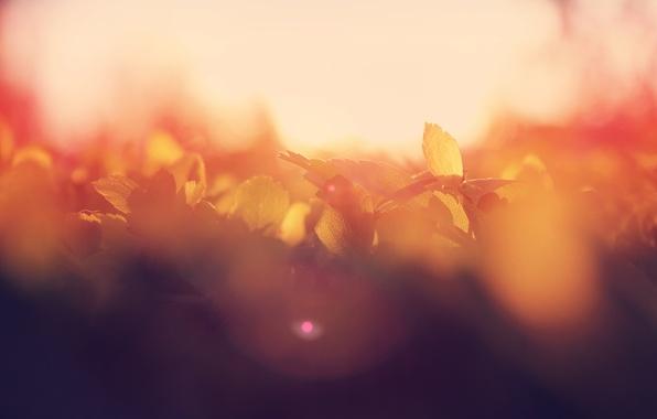 Картинка лето, листья, солнце, макро, блики, рассвет, утро, боке