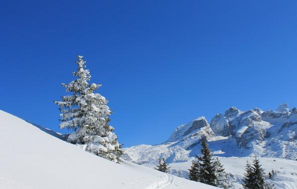 Картинка зима, небо, снег, горы, следы, дерево, ель, склон
