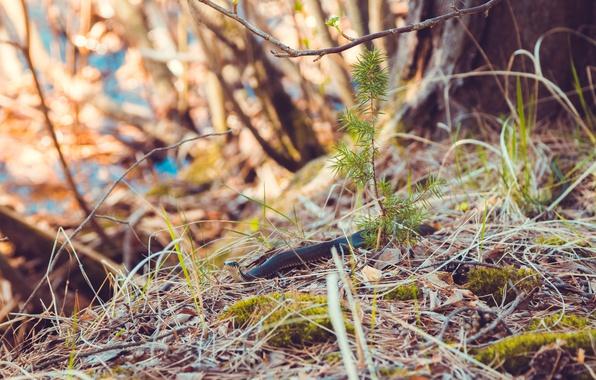 Картинка лес, трава, взгляд, листья, макро, природа, дерево, ветви, елка, мох, змея, красота, ветка, весна, змей, …