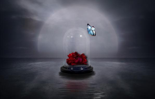 Картинка цветок, стиль, фон, бабочка