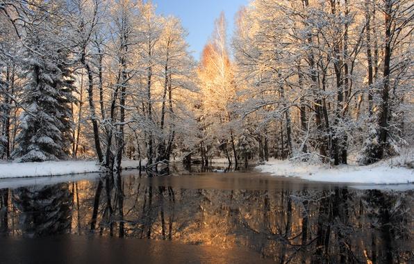 Картинка зима, вода, снег, деревья, природа, фото, лёд