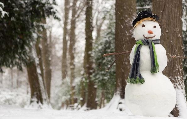 Картинка зима, снег, шляпа, морковка, шарф, снеговик, лес. деревья