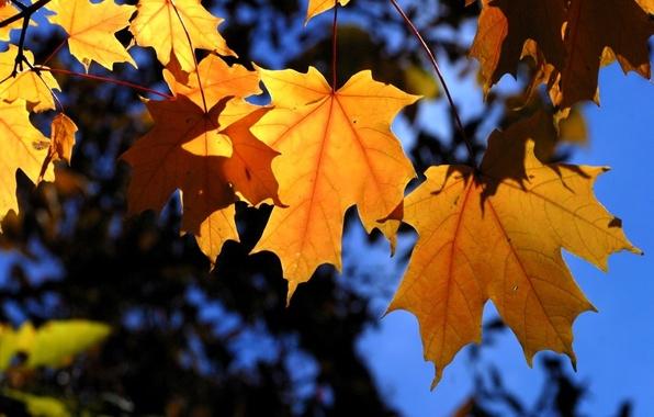 Картинка осень, листья, деревья, ветки, синий, желтый