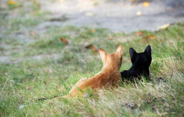 Картинка трава, кошки, улица, черный, рыжий, котята, внимание
