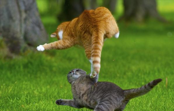 Картинка трава, кот, газон, атакует