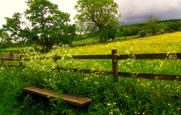 Картинка поле, небо, трава, облака, деревья, цветы, природа, grass, sky, trees, field, скамья, nature, flowers, clouds, …