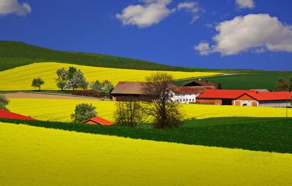Картинка поле, небо, облака, деревья, Лето, домики, белые, синее, ферма