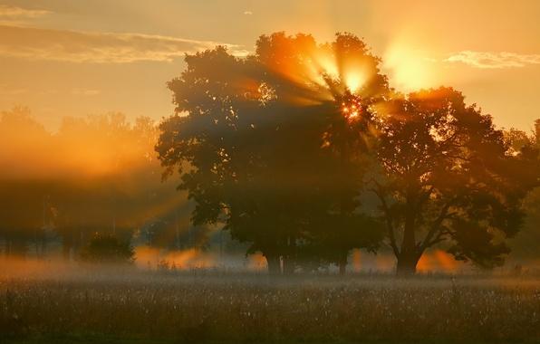 Картинка поле, свет, природа, туман, дерево, утро