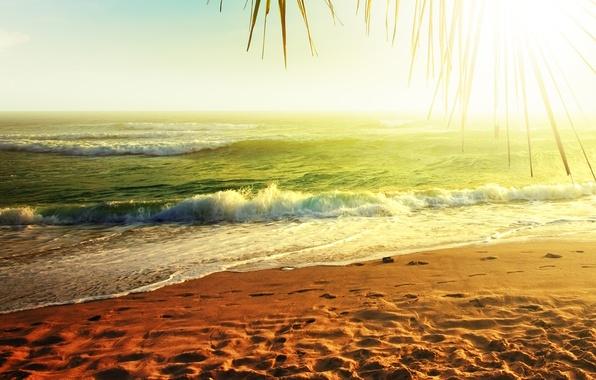 Картинка песок, море, вода, солнце, природа, пальма, пальмы, океан, берег, побережье, пейзажи, beach, widescreen wallpapers, широкоформатные …