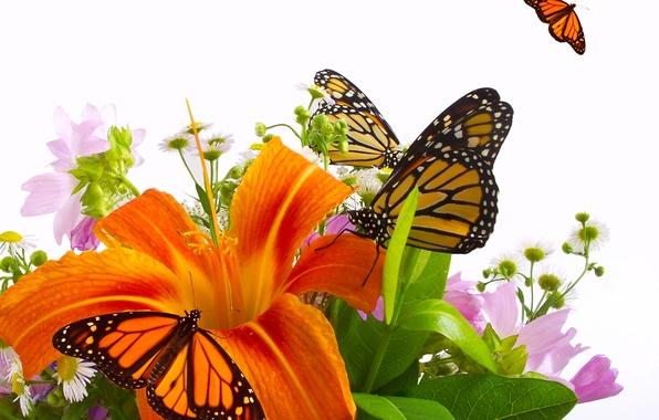 Картинка бабочки, цветы, лилия, оранжевая, букет