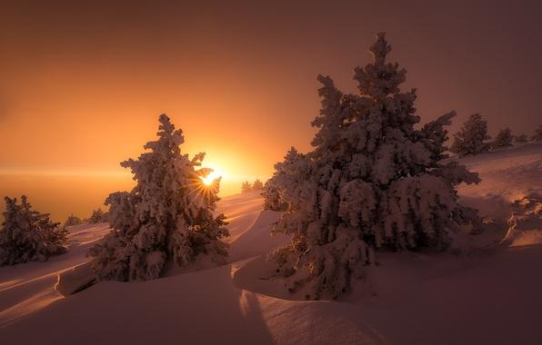 Картинка зима, солнце, свет, снег, деревья, природа, ели