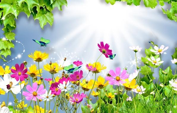 Картинка лето, листья, лучи, свет, цветы, коллаж, бабочка, космея