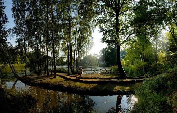 Картинка Солнце, Вода, Отражение, Деревья, Зеленый