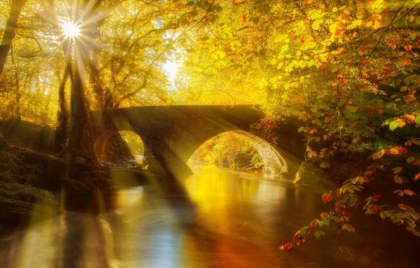 Картинка осень, лес, листья, вода, деревья, мост, природа, парк, река, вид, hdr, прогулка, forest, аллея, river, …