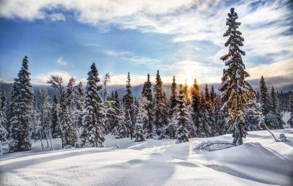 Картинка зима, лес, снег, деревья, ели, Норвегия, Norway, Трюсиль, Trysil