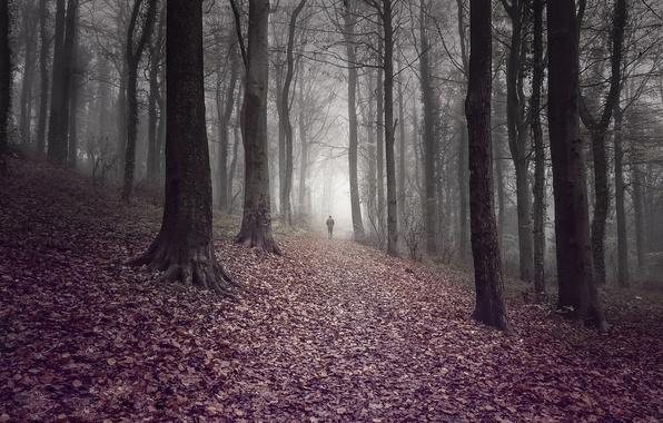 Картинка дорога, осень, лес, листья, деревья, туман, человек, forest, trees, autumn, leaves, fog, way, man