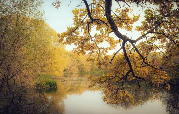 Картинка осень, лес, листья, деревья, ветки, озеро, желтые