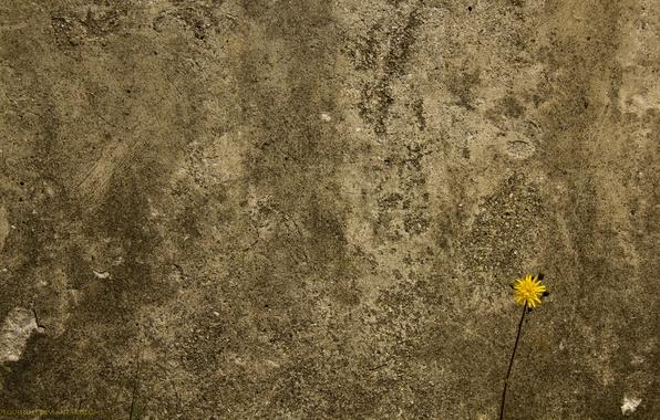 Картинка цветок, стена, бетоная
