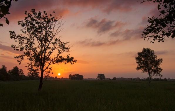 Картинка зелень, небо, трава, листья, солнце, облака, деревья, пейзаж, закат, природа, фон, дерево, widescreen, обои, растительность, …
