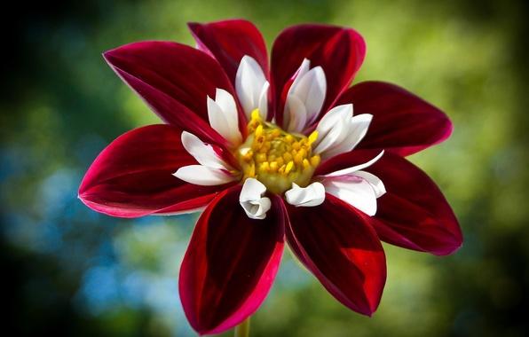 Картинка макро, Цветок, лепестки