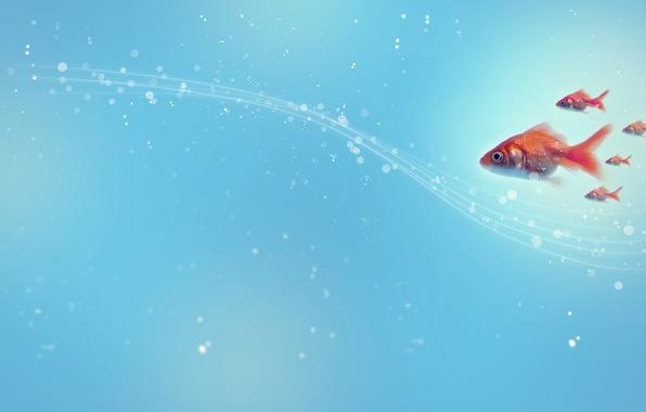 Картинка рыбы, круги, абстракция, стиль, узоры, точки, линий, style, circles, patterns, lines, abstraction, fishes, 2560x1440, dots