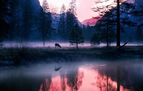 Картинка лес, озеро, олень, горы туман