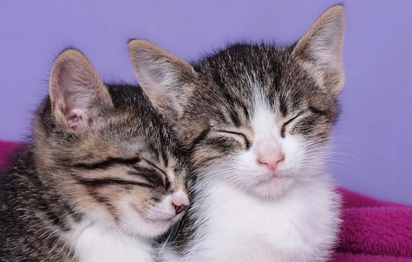 Картинка сон, котята, малыши, спящие