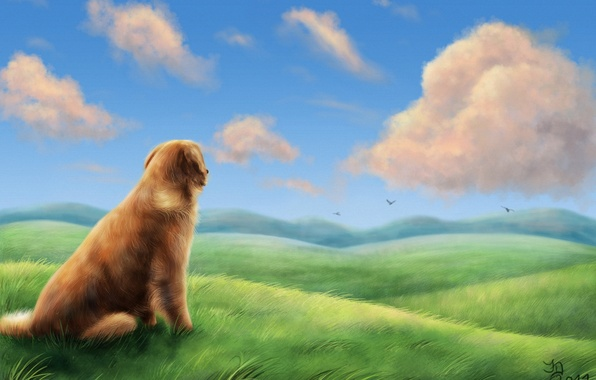 Картинка поле, трава, облака, птицы, ветер, холмы, собака, арт