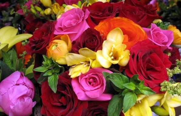 Картинка цветок, цветы, розы, букет, красные, розовые, оранжевые